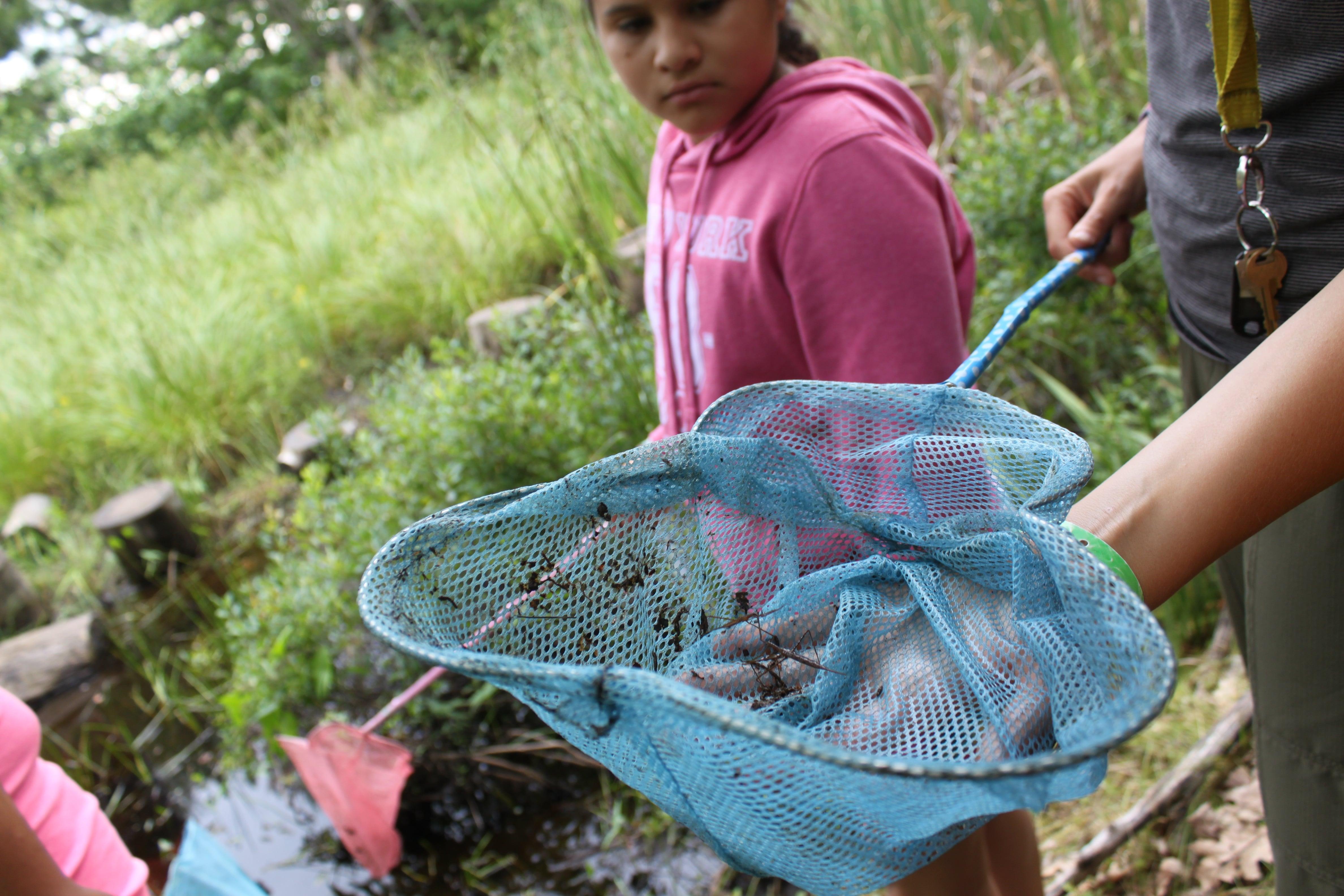 Amphibians: What's in Trips' net??